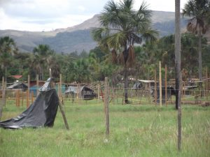 Invasiones 2015 Gran Sabana