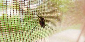 Malaria-770x384