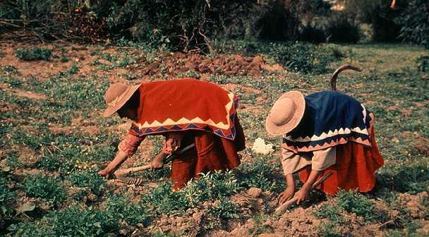 agricultura_bolivia