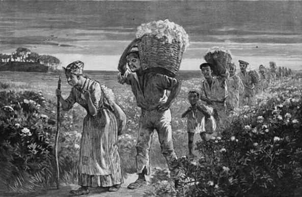 1119_slavery-cotton-624x407